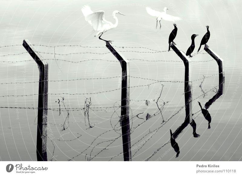Nature Life Bird Brazil Belo Horizonte
