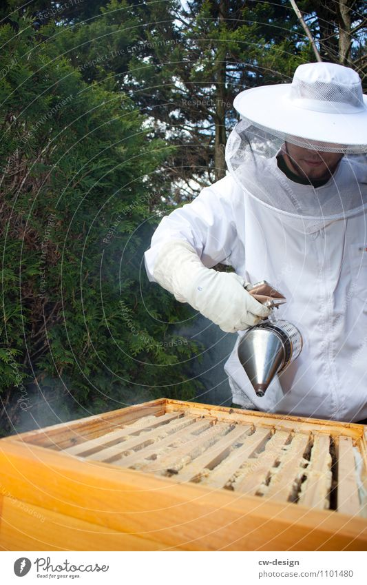 The beekeeper Lifestyle Leisure and hobbies Garden Work and employment Profession Gardening Bee-keeper Bee-keeping Craft (trade) Human being Masculine Young man