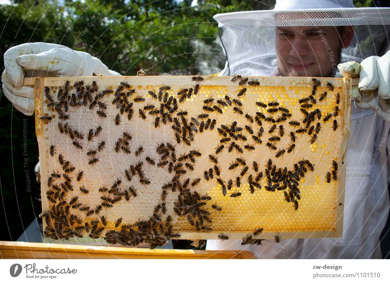marcel Work and employment Profession Bee-keeper Workplace Agriculture Forestry Company Success Human being Masculine Young man Youth (Young adults) Man Adults