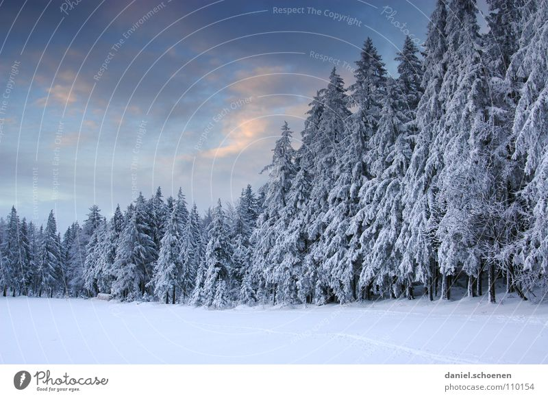 Christmas card 10 Winter Black Forest White Deep snow Hiking Leisure and hobbies Vacation & Travel Jinxed Mystic Abstract Background picture Fir tree Snowscape