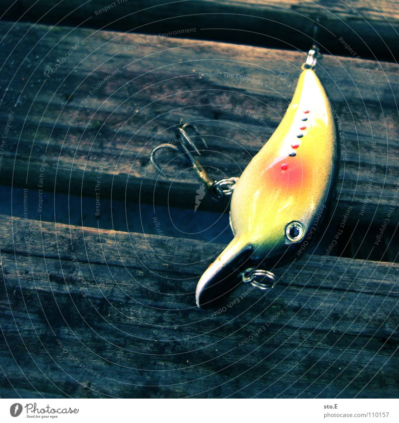 Nature Water Calm Watercraft Lake Arrangement Leisure and hobbies Fish Circle Round Posture String Fishing (Angle) Curl East Afternoon