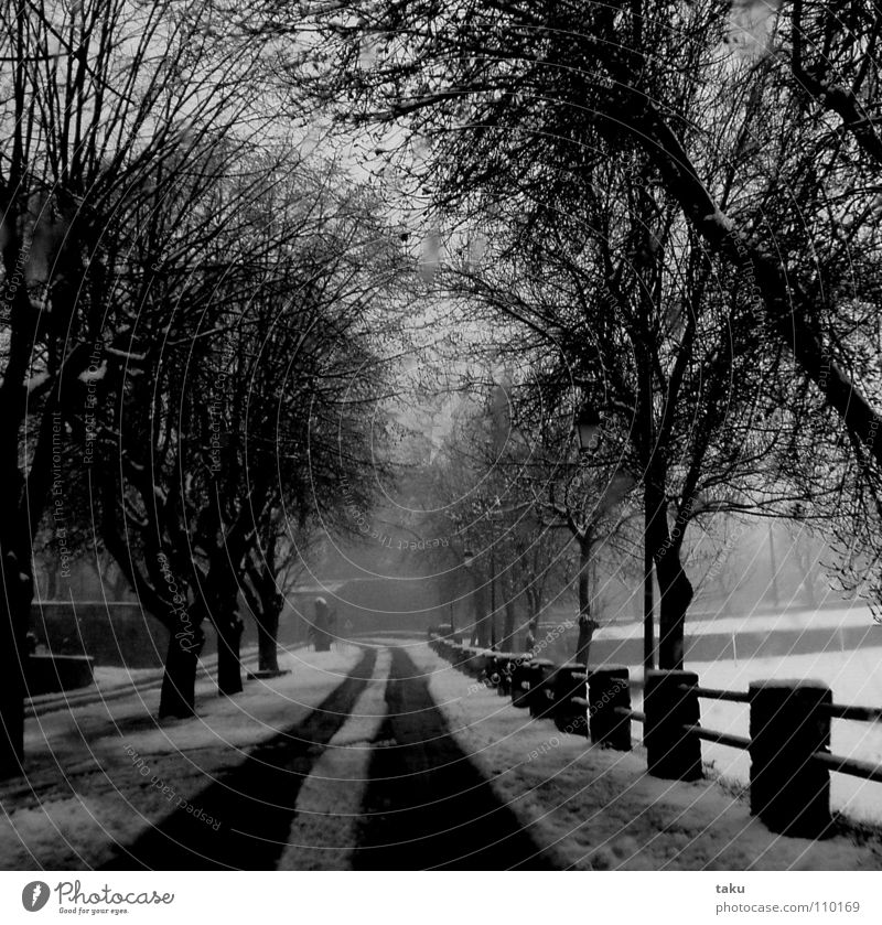 Tree Winter Snow Tracks Fence Avenue Surprise May Provence Centrifuge