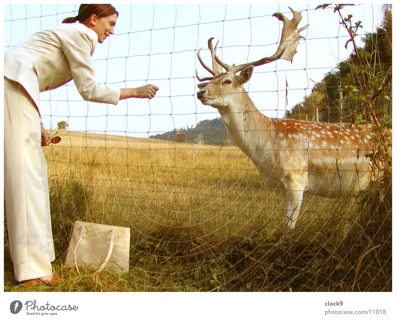 A deerly friendship Woman Feeding Deer Animal Meadow Retro Yellow Friendship Transport Nature Seventies Orange