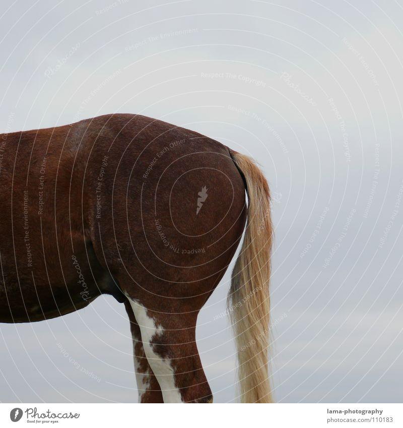 Animal Hair and hairstyles Legs Transport Back Horse Pelt Bottom Hind quarters Mammal Stomach Bangs Farm animal Tails Mane Dappled