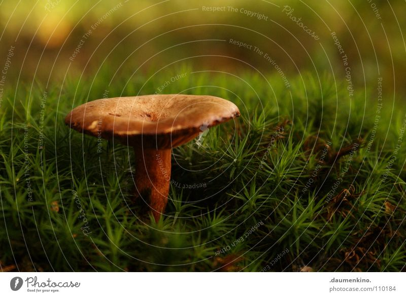 Green Beautiful Tree Autumn Grass Growth Stand Floor covering Blade of grass Mushroom Autumnal Woodground