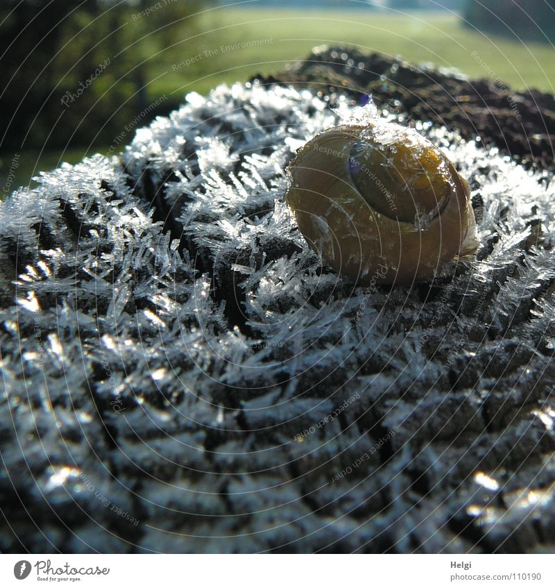 Snail on ice.... Winter Cold Ice Hoar frost Morning Freeze Frozen Minus degrees Snail shell Fence post Wood Ice crystal Long Meadow Tree Wayside Sunbeam Thaw