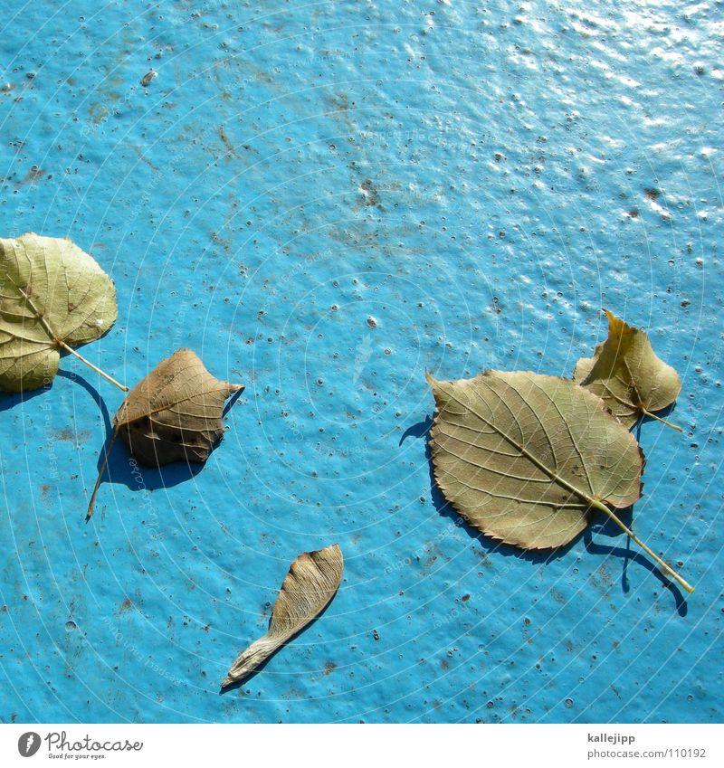Tree Leaf Autumn Lanes & trails Gold Empty Swimming pool Asphalt Maple tree