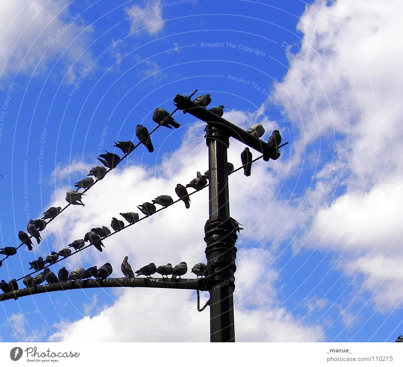 What's new?! Clouds Pigeon Bird Lantern Gossip Narrow Tall Sky Blue Electricity pylon chatter Joy Sit