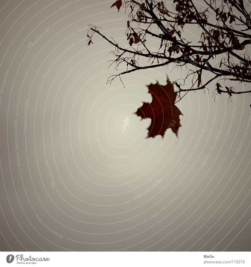 Sky Tree Winter Leaf Loneliness Cold Relaxation Autumn Gray Sadness Rain Fear Wind Grief To fall Branch