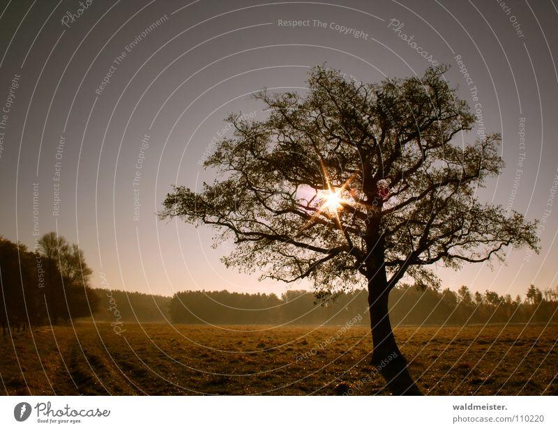 tree Tree Sun Meadow Sky Romance Calm Longing Loneliness Landscape Nature Haze Relaxation