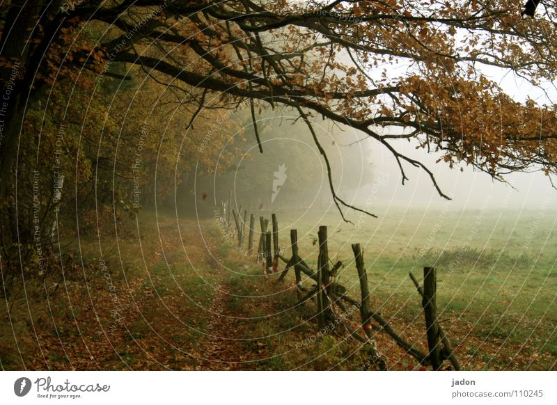 Nature Tree Leaf Loneliness Cold Autumn Meadow Lanes & trails Landscape Field Going Fog Environment Romance To fall Painting (action, work)