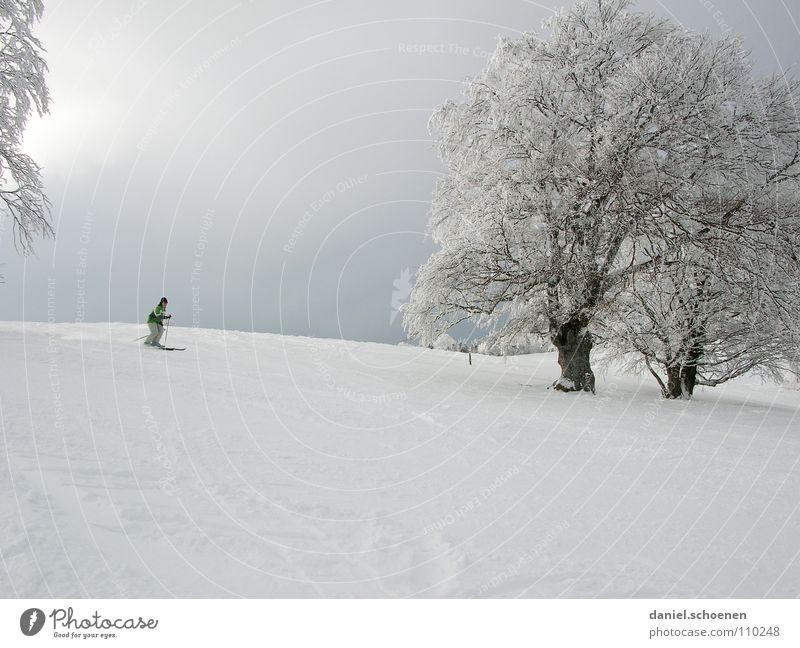 Sky White Tree Sun Joy Winter Vacation & Travel Cold Snow Gray Landscape Bright Lighting Hiking Wind Horizon