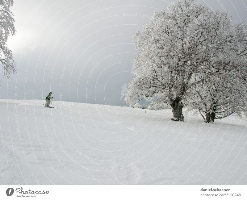Sky White Tree Sun Joy Winter Vacation & Travel Cold Snow Gray Landscape Bright Lighting Hiking Wind Horizon