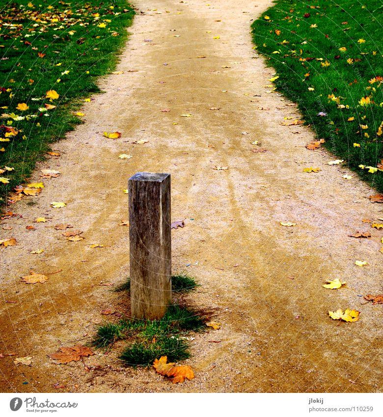 Green Leaf Meadow Autumn Wood Lanes & trails Grass Sand Garden Stone Park Floor covering Lawn Tracks Sidewalk Border