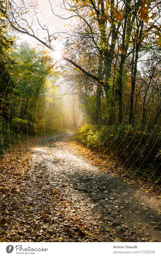 Mystic Forest Trail Lifestyle Leisure and hobbies Vacation & Travel Trip Freedom Environment Nature Landscape Earth Sky Sun Sunlight Autumn Beautiful weather