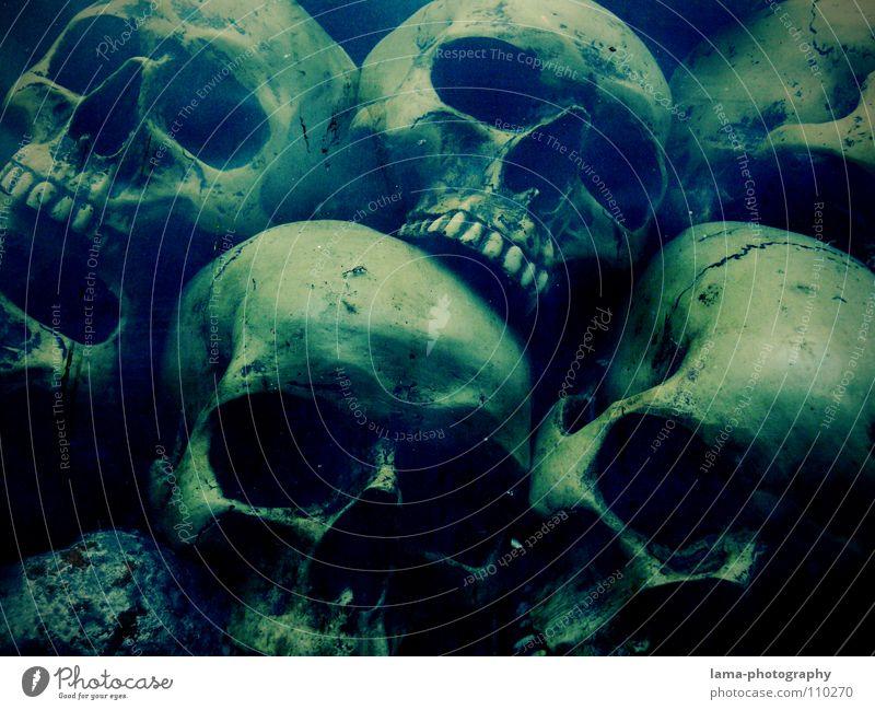 Skulls (in depth II) skull Skeleton Brain and nervous system Disastrous Poisoned Drown Ocean Bottom of the sea Algae Creepy Horror film Fear Nightmare Grave