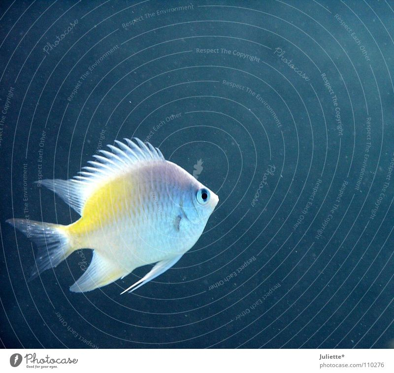 Alone in the great sea Ocean Loneliness Fishing (Angle) Fisherman Water Blue Colour Bubble Water wings Swimming & Bathing