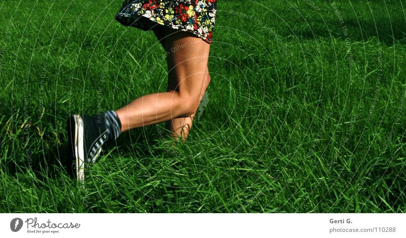 Woman Summer Meadow Autumn Playing Movement Small Legs Brown Healthy Wind Leisure and hobbies Walking Young woman Dress Firm