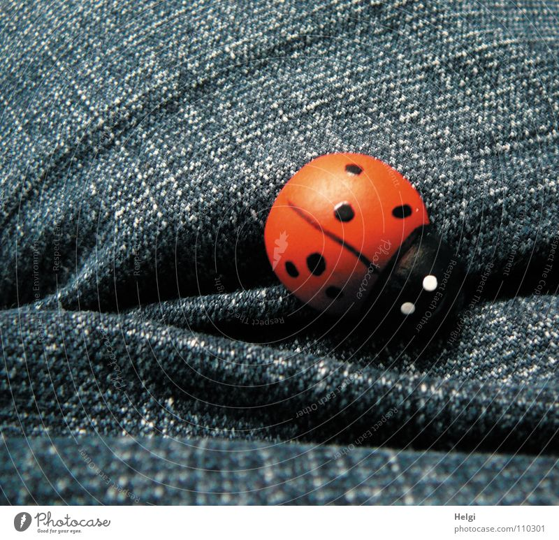small wooden ladybird lies on blue denim Ladybird Jeans Denim Cloth Red Black White Good luck charm Congratulations Wood Painted Decoration Joy Beetle Happy