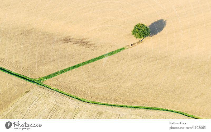 Nature Tree Loneliness Landscape Autumn Field Uniqueness