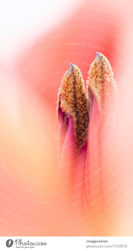 seed Flower Pistil Seed Eroticism Yellow Red Protection Attachment Fertile Propagation In pairs Together Colour photo Detail Macro (Extreme close-up)