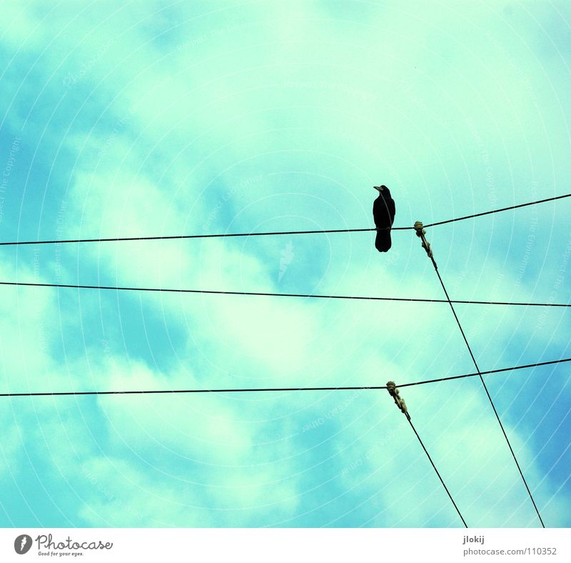 observer Raven birds Crow Bird Feather Mistrust Transmission lines Electricity Animal Living thing Bird's-eye view Audience Black White Loneliness Sky Sit