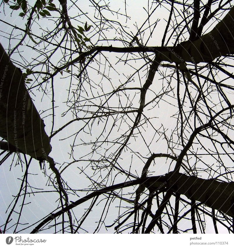 Treetops V Autumn Forest Leaf Winter Black White Under Clouds Sky Branch Twig Nature Blue Shadow Tall To fall Wind