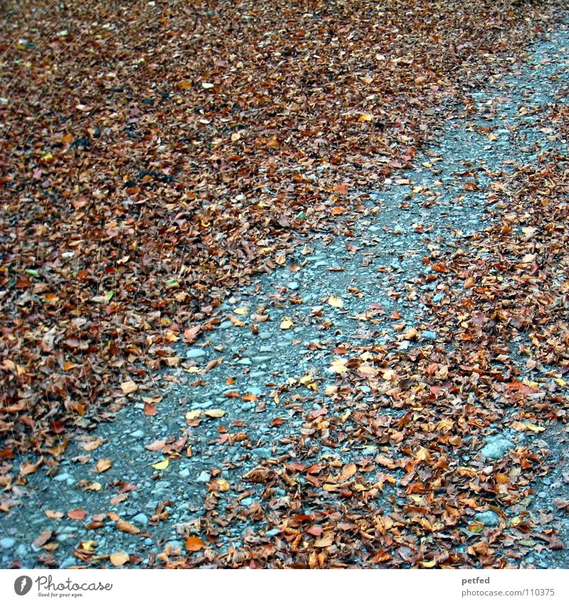 streaked Leaf Brown Gray Autumn Winter Multiple Tree Lanes & trails Floor covering Weather Old Many Earth