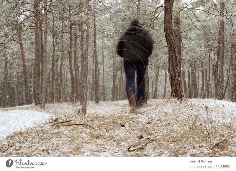 Move it! Human being Masculine Man Adults Body 1 45 - 60 years Running Sports Walking Cold Snow Forest Stone pine Pine Woodground Winter Jogging Flee