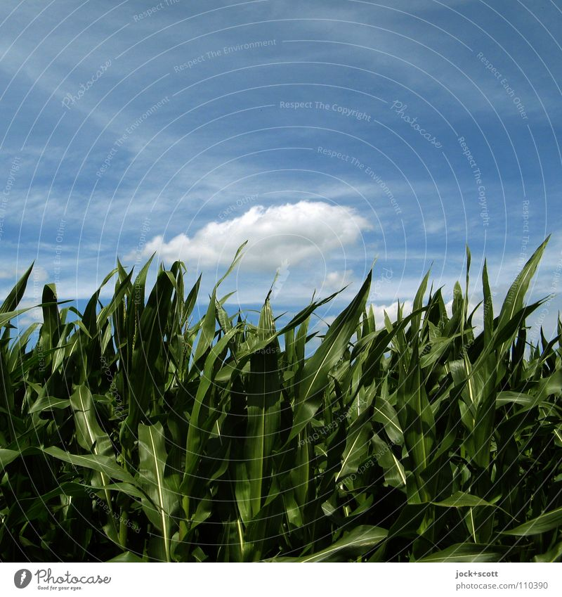 Nature Blue Plant Green Summer Calm Clouds Warmth Natural Flying Field Growth Authentic Wind Fresh Perspective