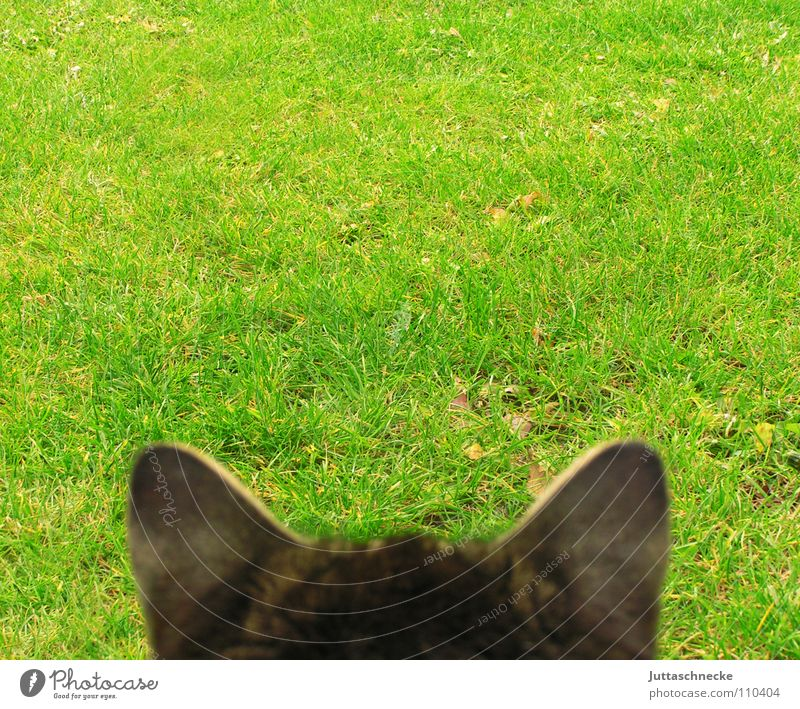 Cat Animal Meadow Grass Garden Time Wait Observe Point Ear Listening Concentrate Testing & Control Audience Mammal Tin