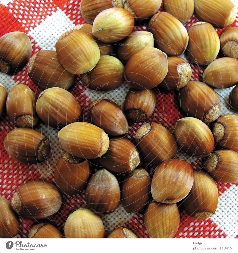 many ripe hazelnuts lie on a red-white-checked fabric blanket Nut Hazelnut Autumn Picked Oval Brown Side by side Nutrition Lie Heap Mature Delicious tablecloth