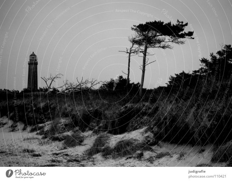 western beach Lake Lighthouse Ocean Beach Coast Grass Navigation Orientation Salty Vacation & Travel Navigation mark Fischland-Darss-Zingst Prerow Western Beach