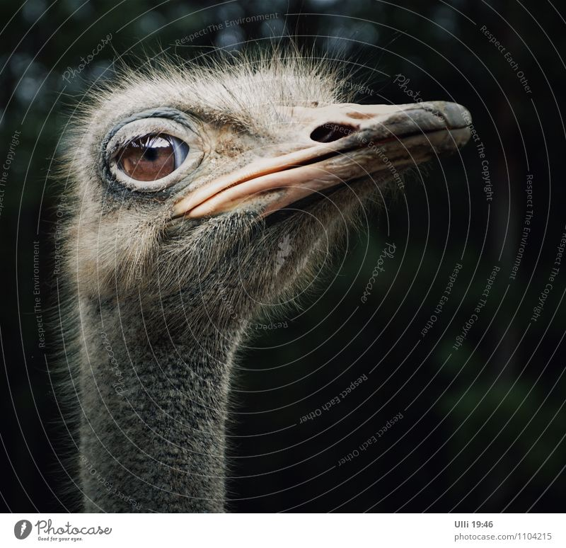 An ostrich named ´maspi`........................................................................................................... Trip Summer Nature Animal