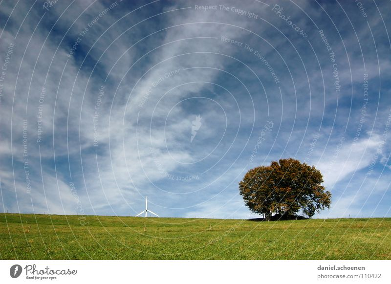 the tree, the sky and wind energy Autumn White Clouds Cirrus Beautiful Meadow Grass Horizon Tree Green Hiking Black Forest Sky Blue Weather Wind