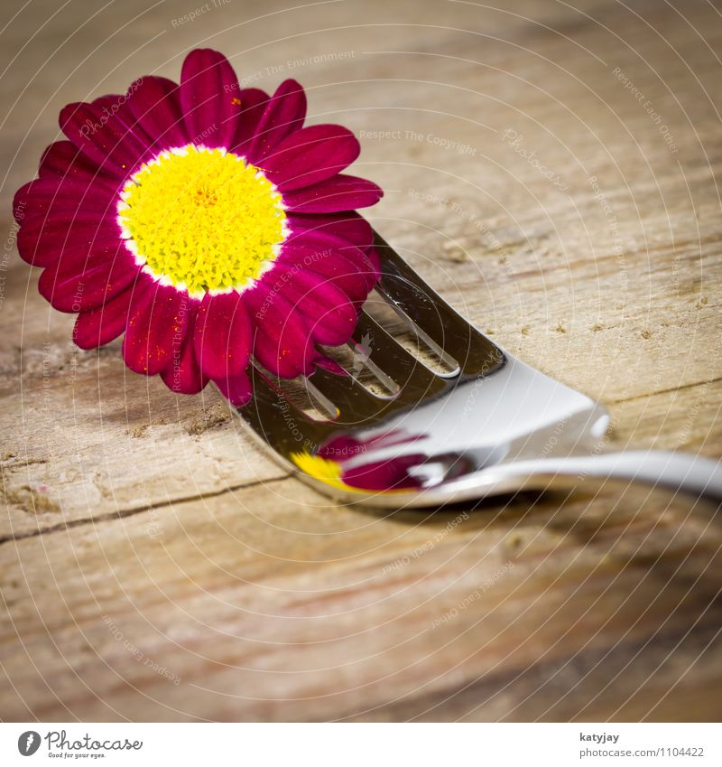 Fork with purple flowers Restaurant Cutlery Marguerite Flower Gift Blossom Credit Spring Birthday Violet Gerbera Happy Card Healthy Eating Set meal Daisy