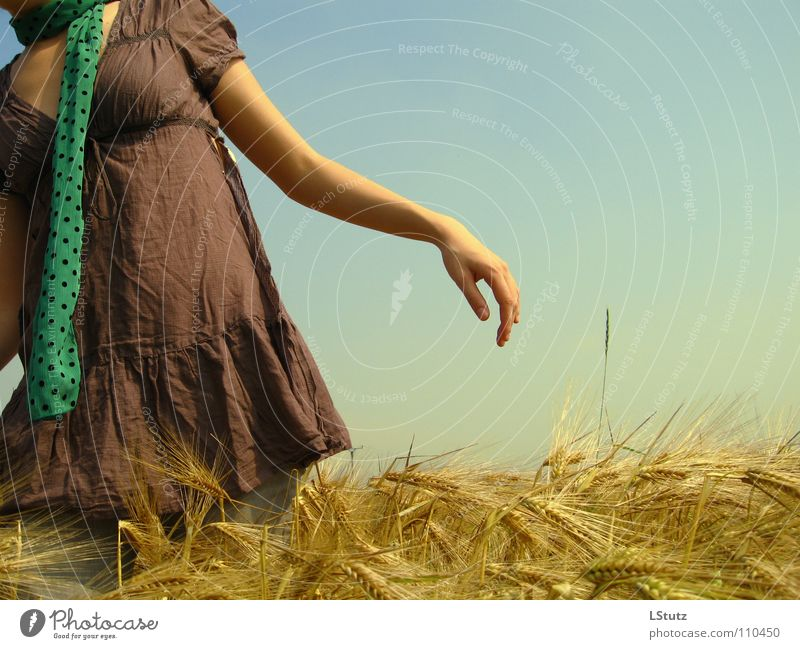fields of gold Summer Young woman Youth (Young adults) Woman Adults 1 Human being 18 - 30 years Nature Cloudless sky Sunlight Beautiful weather