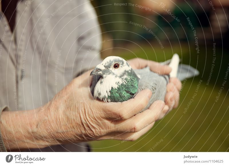 I'd rather have the dove in my hand. Leisure and hobbies pigeon racing pigeon breeding Living or residing Garden Human being Masculine Man Adults Male senior