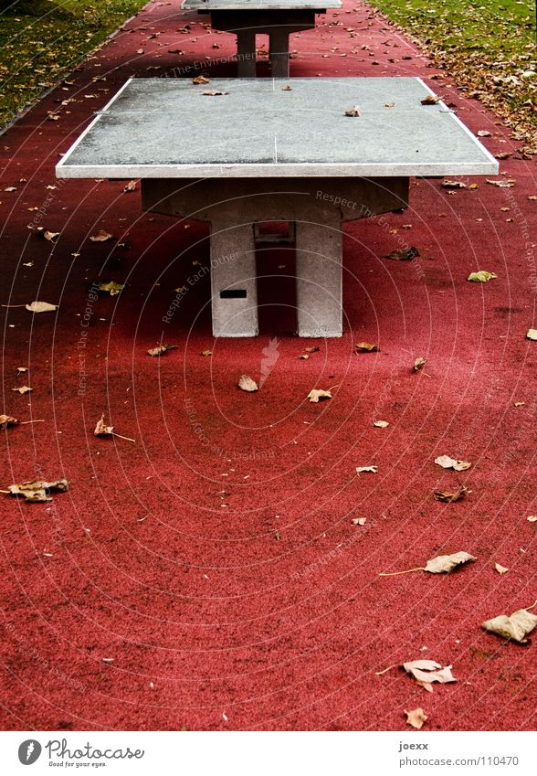 Red Joy Leaf Sports Autumn Playing Stone Concrete Lawn Break Soft Floor covering Leisure and hobbies Playground Hard