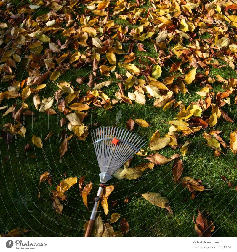 typical autumn work. Autumn Leaf Tree Grass Rake Compost Transience Trash Yellow Green Gardener Market garden Autumnal work work foliage work defoliate To fall
