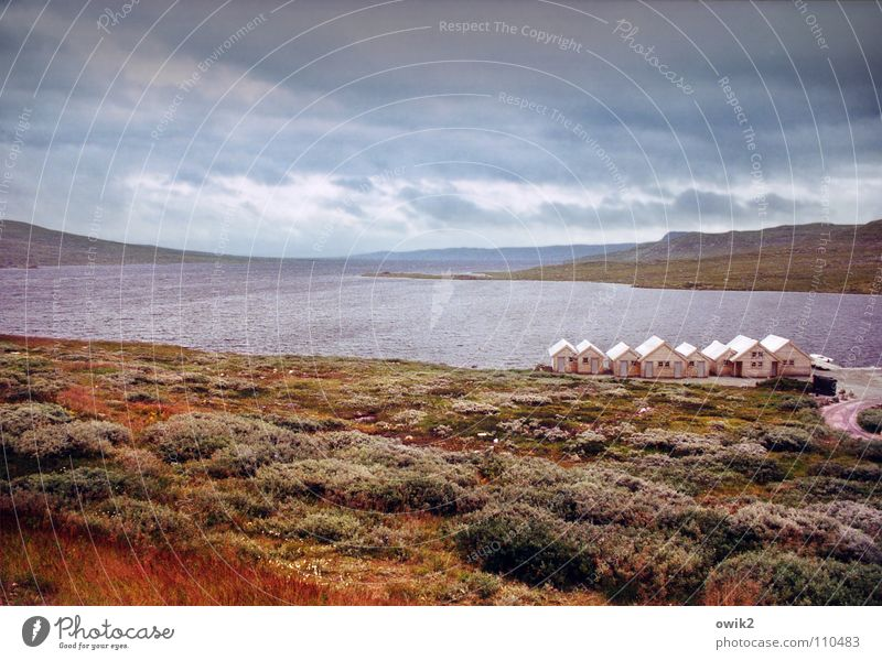 Hardangervidda Vacation & Travel Mountain Gastronomy Environment Nature Landscape Plant Sky Clouds Horizon Autumn Climate Weather Moss Lichen Lake
