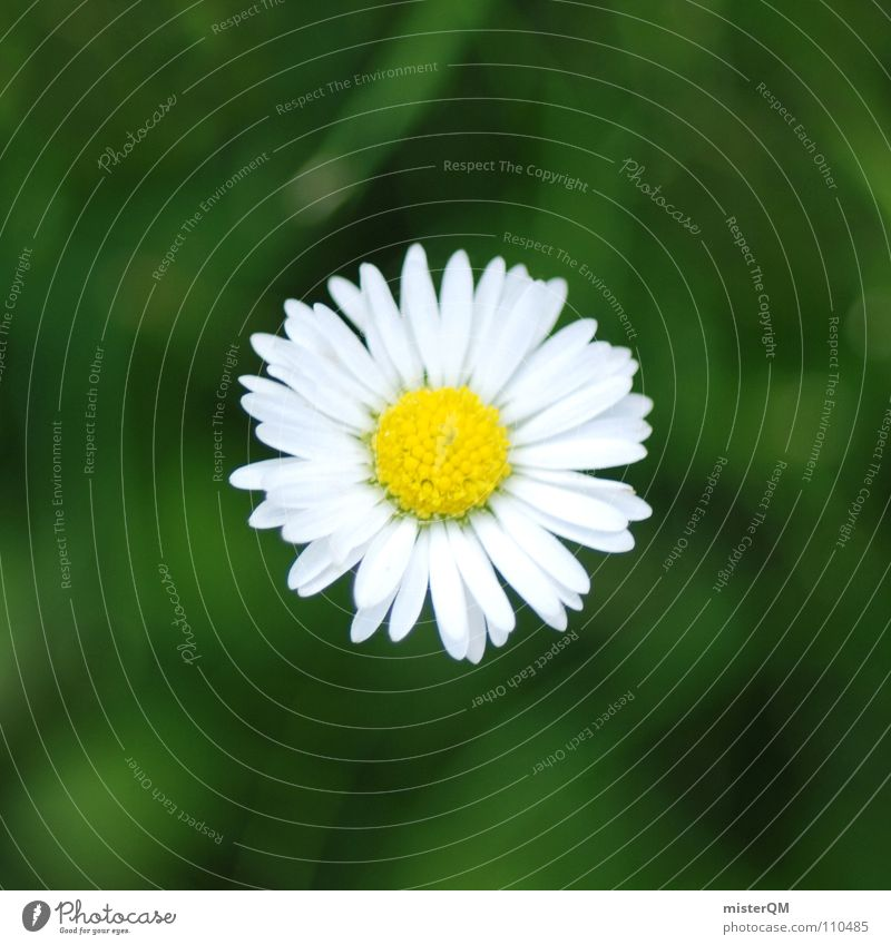 Nature White Green Plant Summer Flower Joy Calm Yellow Relaxation Landscape Small Blossom Weather Healthy Background picture