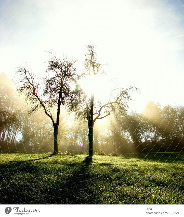 Nature Sky Tree Sun Autumn Meadow Lighting Fog Peace Awareness Wake up Celestial bodies and the universe