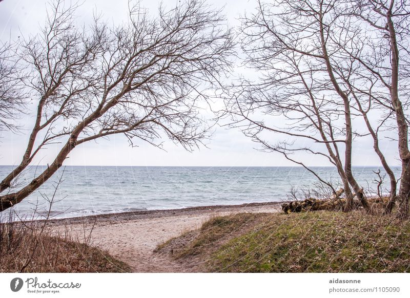 Baltic Sea near Warnemünde Nature Water Cloudless sky Beautiful weather Beach Contentment Attentive Calm Wanderlust Loneliness Mecklenburg-Western Pomerania