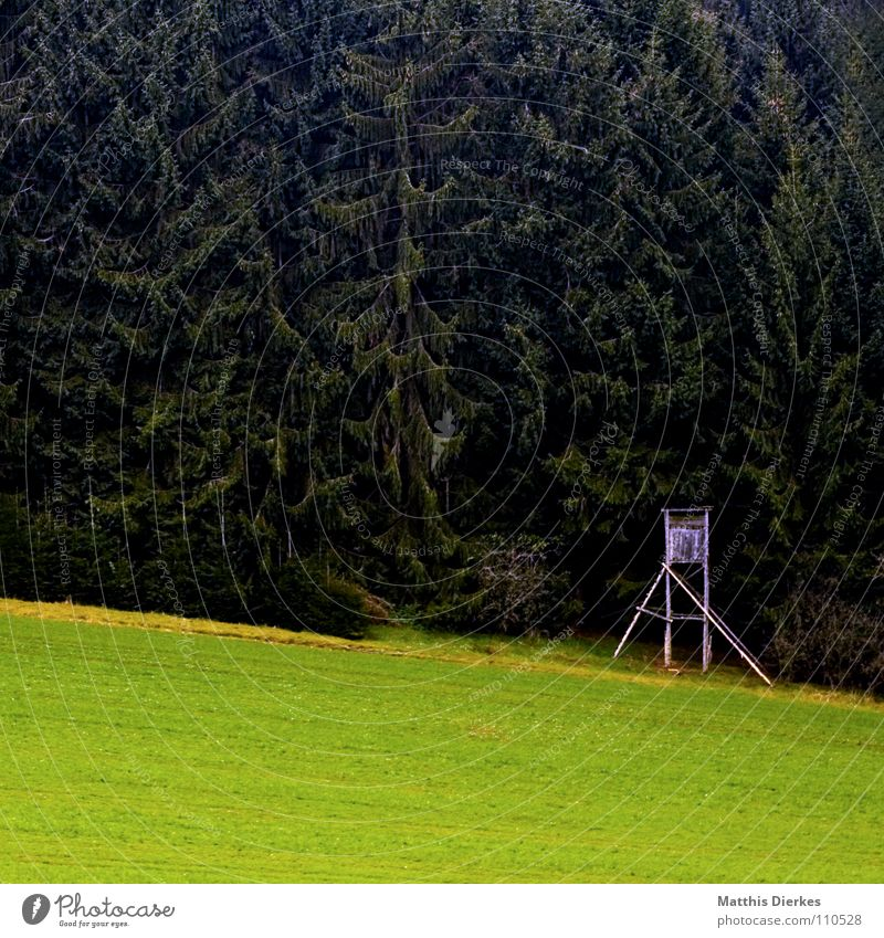 raised hide Hunting Blind Forest Coniferous forest Fir tree Meadow Green space Idyll Autumn Hiking Sauerland Gloomy Autumnal weather Twilight Evening Afternoon