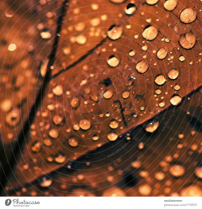 Water Plant Leaf Black Death Autumn Gray Brown Rain Wet Drops of water To fall Vessel Late Leaf green Yellowness