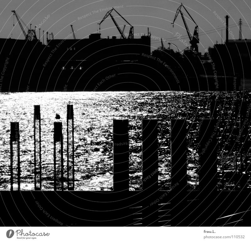 Beautiful Water Sun Hamburg Harbour Navigation Jetty Crane Port City Elbe Shipyard Port of Hamburg