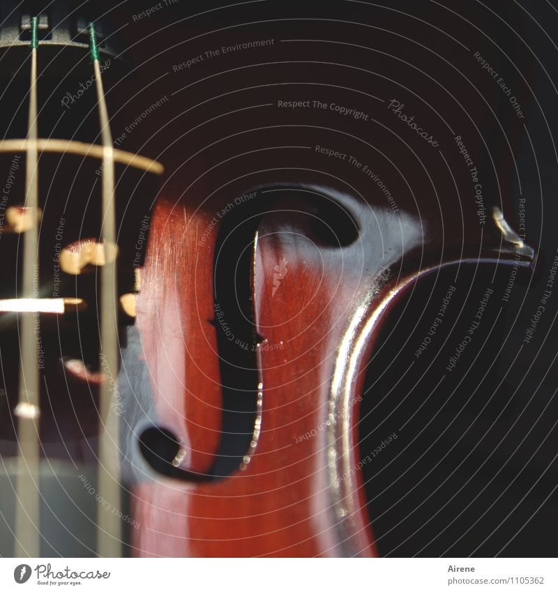 Red Black Wood Brown Music Concert Musical instrument Sound Musician Practice Diligent Violin Disciplined Orchestra Tense Make music