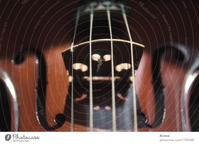 Black Wood Line Brown Music Harmonious Concert Tension Musical instrument Symmetry Parallel Sound Ornament Musical instrument string Violin Orchestra