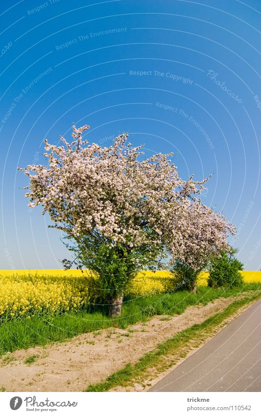 summer day Blossom Canola Field Green Yellow White Summer Physics Long Clouds Calm Bushes Progress Midday Blue Sky Street Lanes & trails Stone Sand Warmth